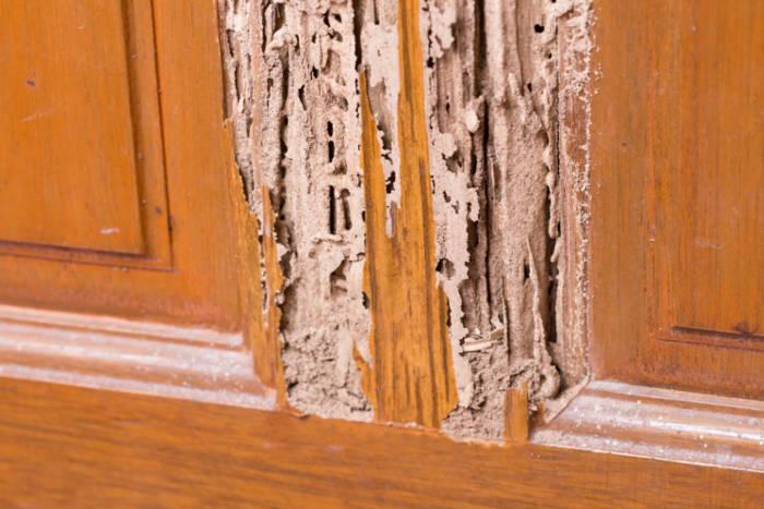 house termite damage